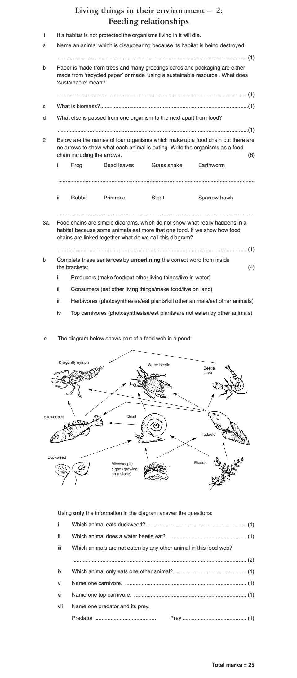 Food webs and chains worksheets ibookread Download
