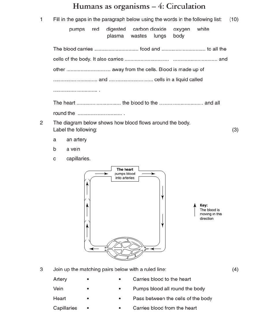 Worksheets Circulatory System Worksheets circulatory worksheet