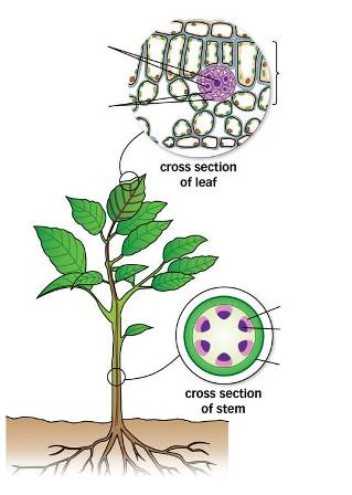 Plants yr 9 ccuart Image collections