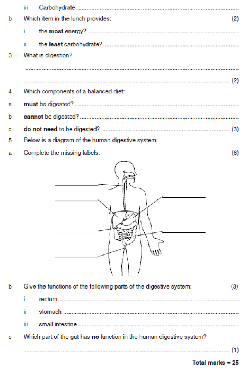 Worksheets Digestion Worksheet digestion worksheet worksheet