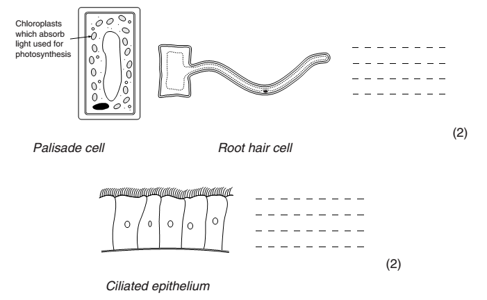 5 label plant cell worksheet in Cell - Biological Science Picture ...