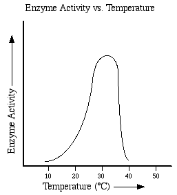 Graphs And Factors