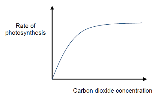 as light intensity increases the rate of photosynthesis I am doing an assignment (a2 level) on how increasing light intensity can increase the rate of photosynthesis i am aware of the light dependent and light independent reactions of photosynthesis and just wondered if anyone could give me any deeper scientific knowledge on why exactly light does increase the rate of photosynthesis.
